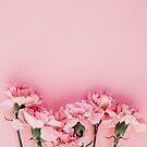 Pink carnations  by LuxeBouquet
