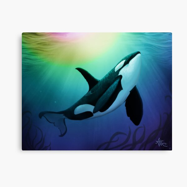 """""""The Dreamer Ascends"""" by artist Amber Marine ~ (Copyright 2015) ~ Orca Art / Killer Whale Digital Painting Canvas Print"""