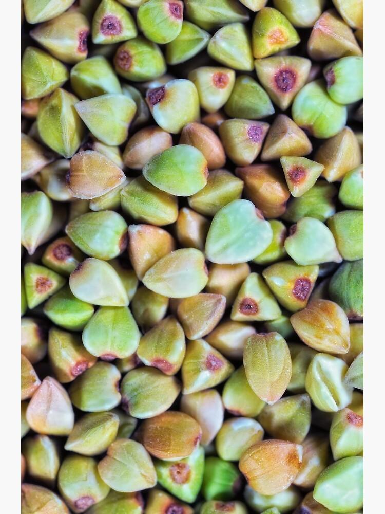 Buckwheat macro by fardad