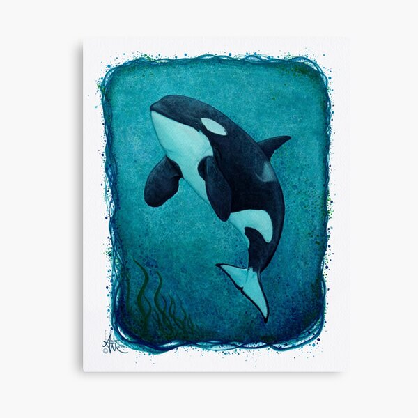 """""""The Matriarch"""" by Amber Marine ~ killer whale / orca watercolor painting, (J2 Granny) art © 2016 Canvas Print"""
