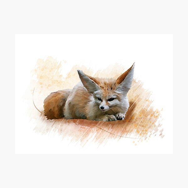 Digital Painting of Fennec Fox resting Photographic Print