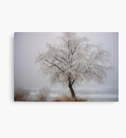 Frozen Winter Metal Print