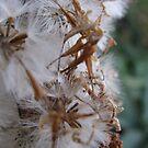 The Delicate Details of a Dandelion by Jennifer  Gaillard
