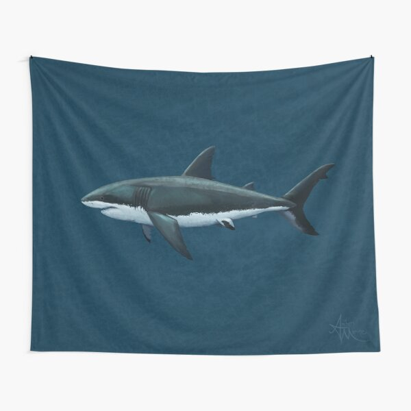 Carcharodon carcharias by Amber Marine, great white shark illustration, art © 2015 Tapestry