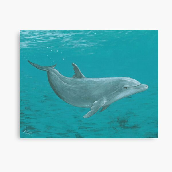 """Shallow Reef"" by Amber Marine ~ acrylic dolphin painting, © 2014 Canvas Print"