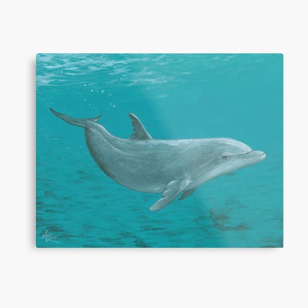 """""""Shallow Reef"""" by Amber Marine ~ acrylic dolphin painting, © 2014 Metal Print"""