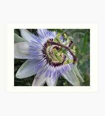 The Oddly Beautiful Passion Fruit Flower Art Print