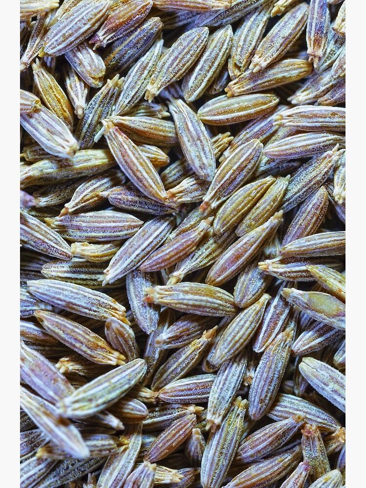 Cumin Seeds by fardad