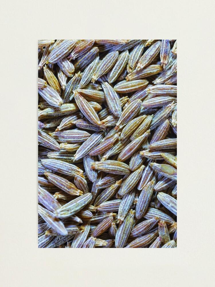 Alternate view of Cumin Seeds Photographic Print
