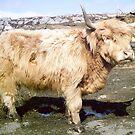Shaggy Scottish Bull von BlueMoonRose
