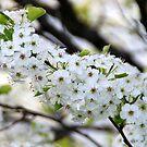 White Flowers by Vonnie Murfin