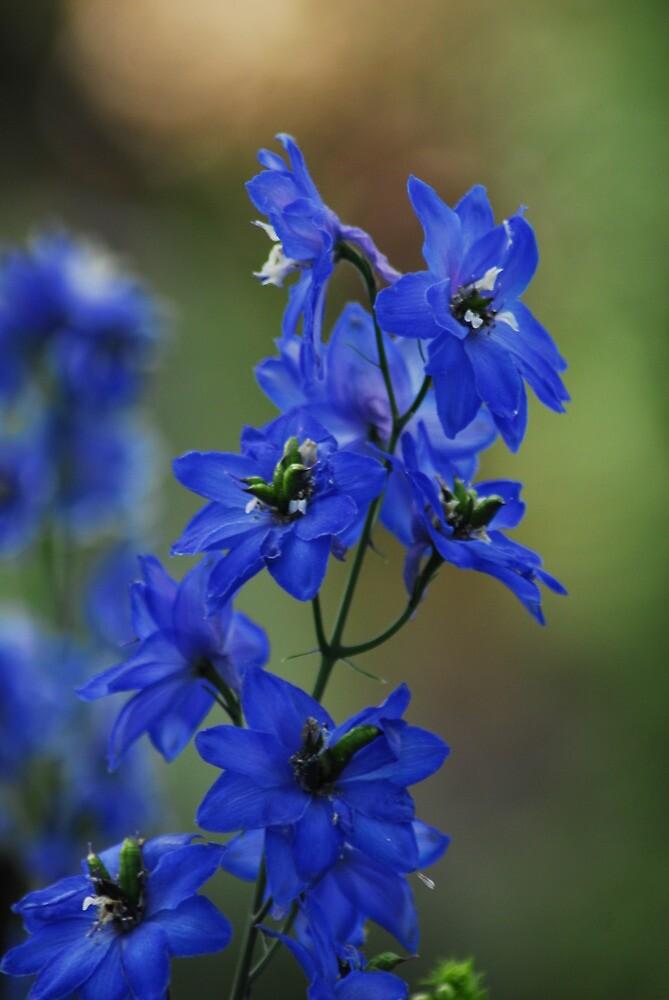 The Beauty of Blue by Laurel Haarer