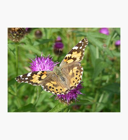 painted lady posing Photographic Print