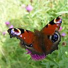 peacock butterfly by monkeyferret