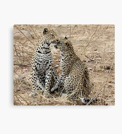 Mother And Daughter Leopards - South Africa Canvas Print