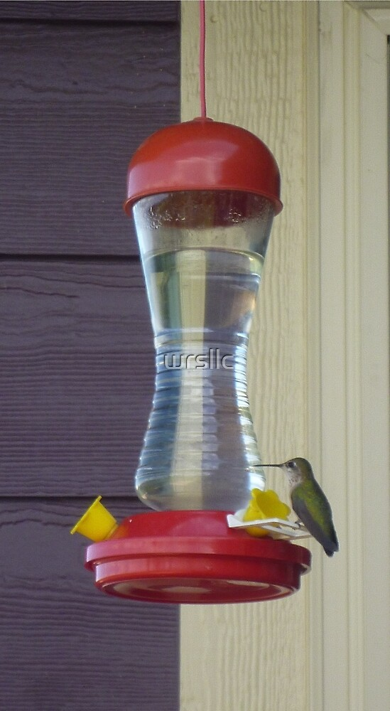 Hummingbird at Rest by wrsllc