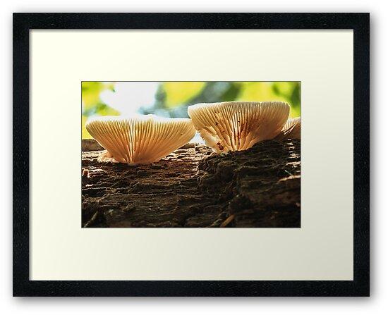 Mushroom on Log by Gary Horner