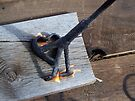 Flames of a Branding Iron by Betty  Town Duncan