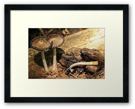 Mushrooms on Log by Gary Horner