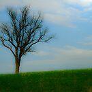 Spring Love by Mary Ann Reilly