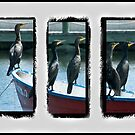 Triptych of Cormorants by DeerPhotoArts