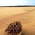 beach flower by twistwashere