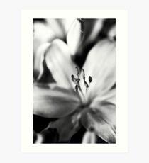 MIFGS - lilies Art Print