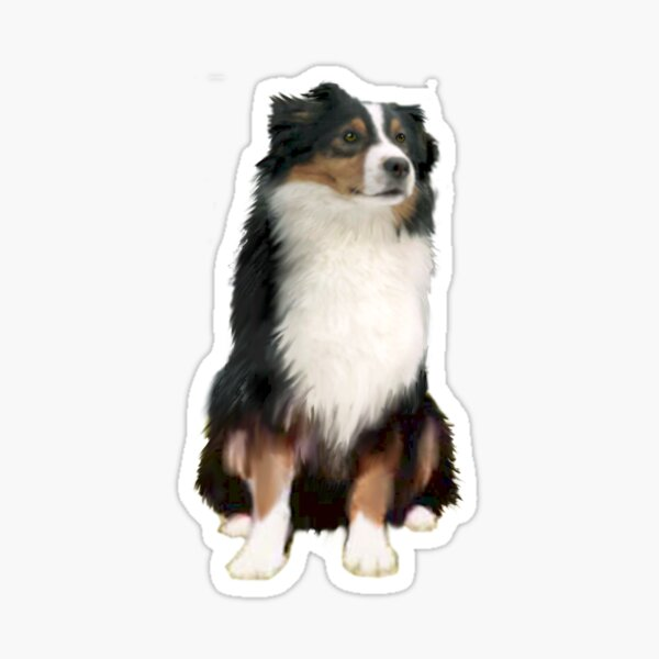 Australian Shepherd - Tri Colored Sticker