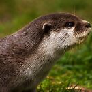 Otter Profile by HelenBeresford