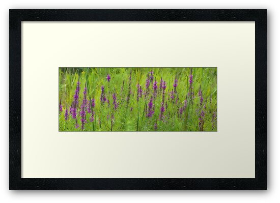 Patch Of Loosestrife by sundawg7
