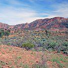 The Heysen Range, Flinders Ranges, South Australia by Adrian Paul