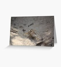 Crabs fight Greeting Card