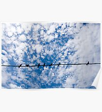 Birds on a wire Poster
