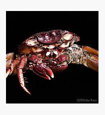 Crab: A Portrait 2 Photographic Print