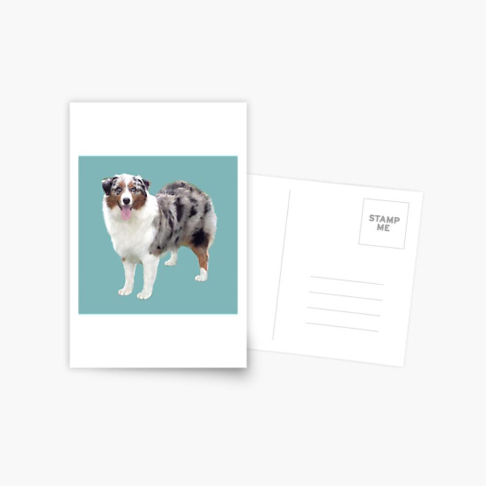 Australian Shepherd - Merle (standing) Postcard