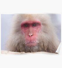 Grandpa Onsen Monkey - Japan Poster