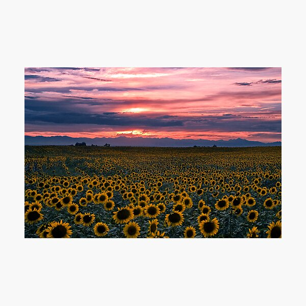 The Field of Dreams Photographic Print