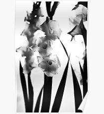 MIFGS - gladioli Poster