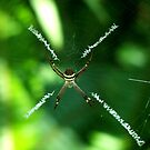 ~ St Andrews Cross ~ Spider ~ by Donna Keevers Driver