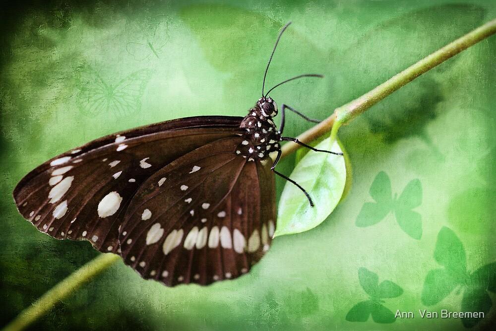The Last Butterfly of Summer by Ann  Van Breemen