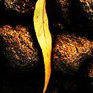 leaf between rocks by twistwashere