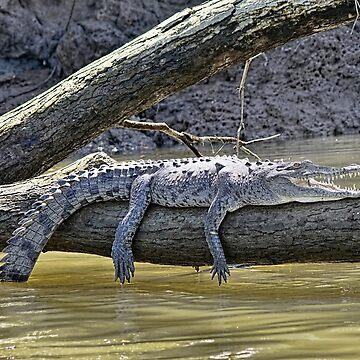 El cocodrilo sonriente de lanrophot