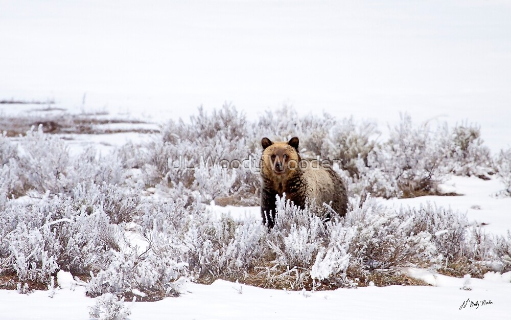 Grizzly     #1774 by JL Woody Wooden