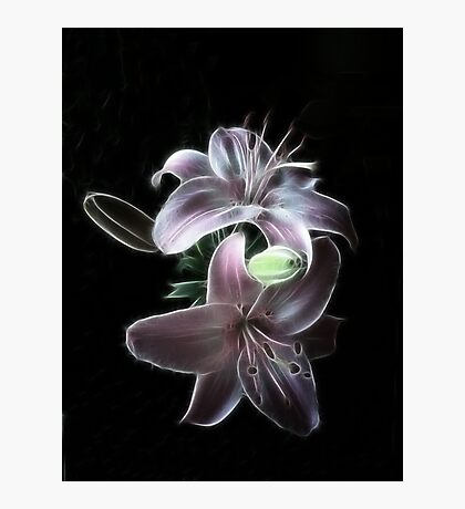 Lilliums Photographic Print