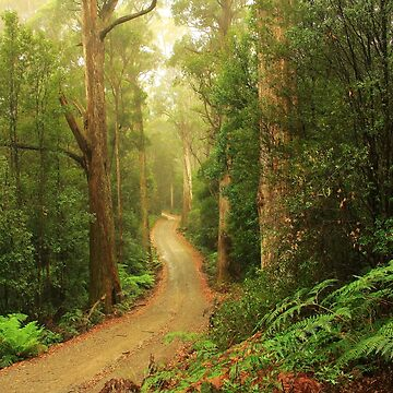 Spion Kop Road , south Forest  by phillip24