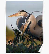 Beautiful Herons Poster