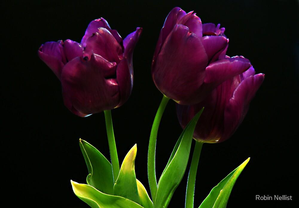 Purple on black by Robin Nellist