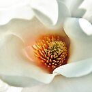 Magnolia by MariaVikerkaar