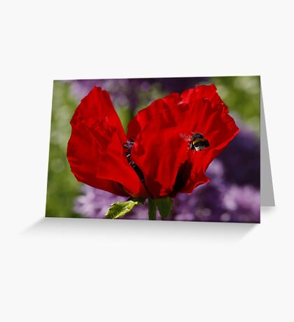 Poppy and Bumble Bee Greeting Card
