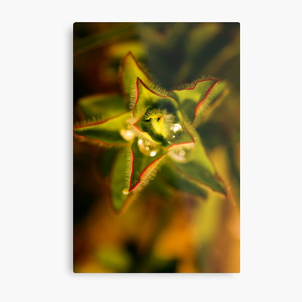 found water in a star Metal Print